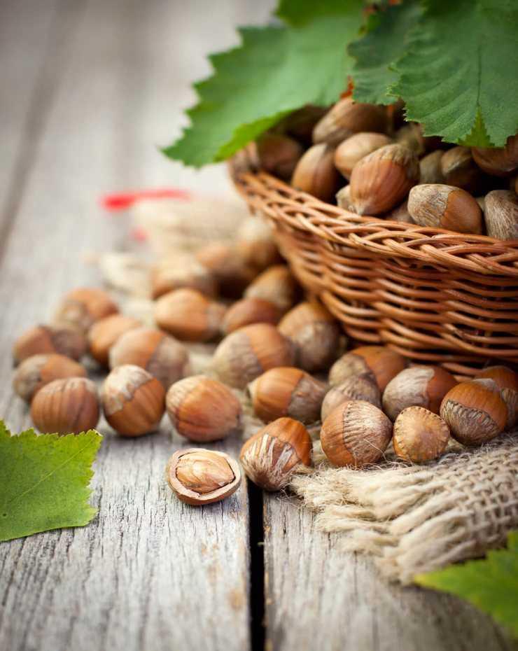 Картинка лесных орешков