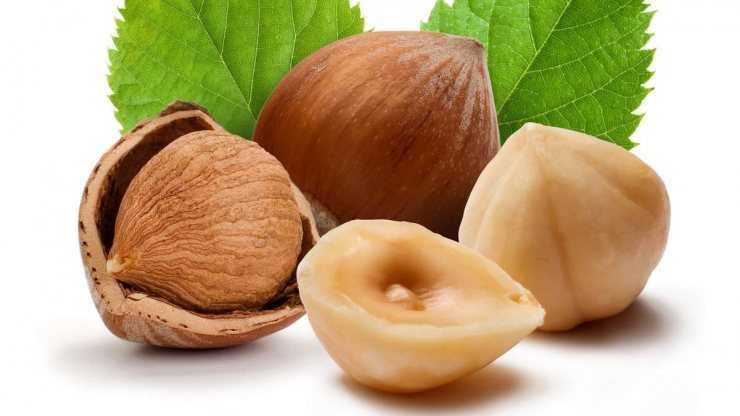 Фундук орехи польза и вред для мужчин