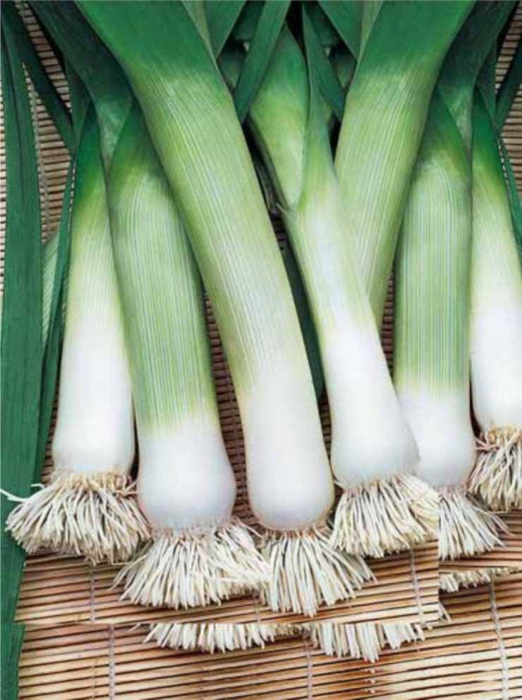 коллекция отличается сорта лука зеленого с фото индивиды