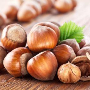 Польза лещины — состав, как выбирать и употреблять лесные орехи. 115 фото разнообразных вариантов применения в питании