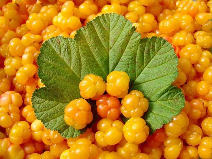 Полезные свойства морошки 🚩 варенье из морошки полезные свойства 🚩 Еда 🚩 Другое