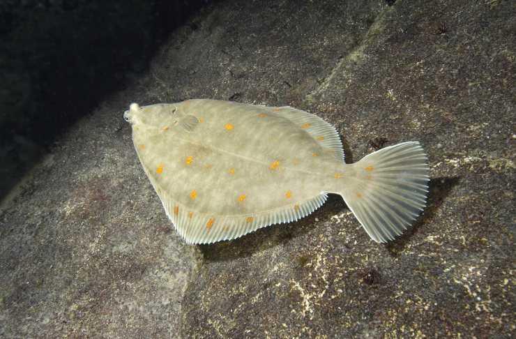 Фото самоловы для рыбы из сетки набор опций